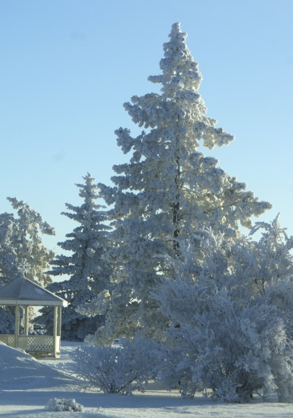 Frosty Gazebo and trees