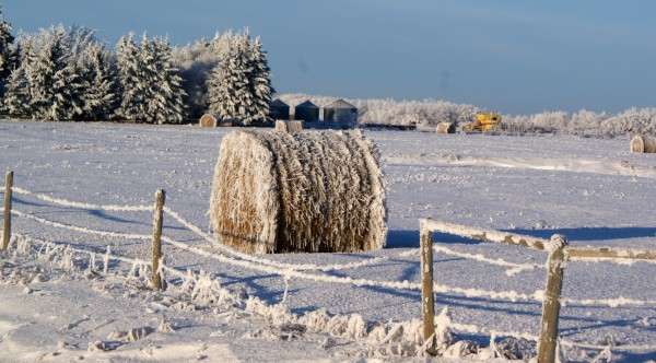 Frosty bale of hay