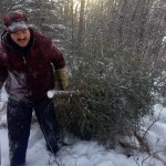 Keeping your Christmas tree healthy and happy